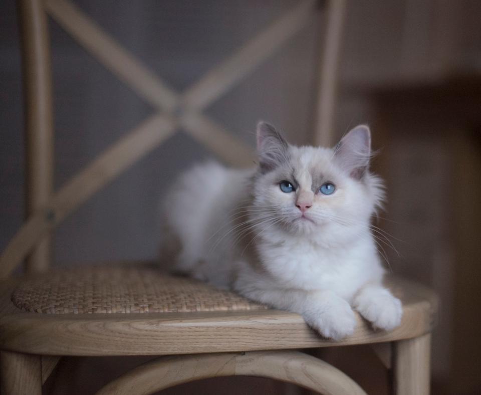 skaffa katt vad behövs